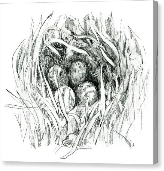 Godwit Nest Canvas Print