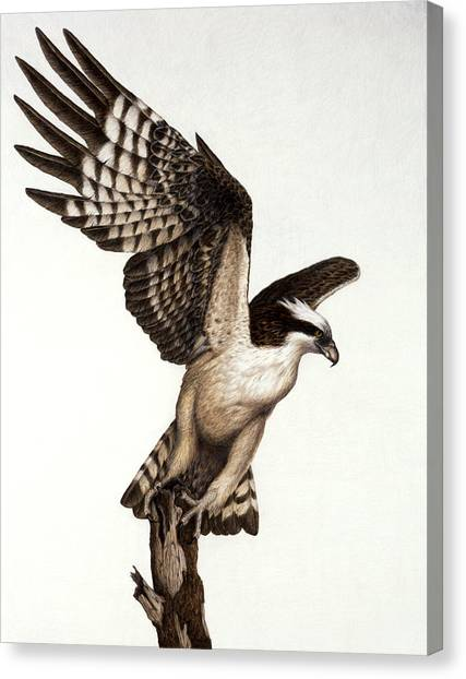 Osprey Canvas Print - Going Fishin' Osprey by Pat Erickson