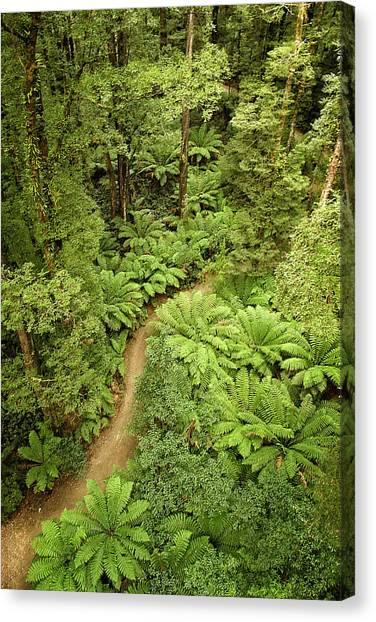 Great Otway National Park Canvas Print - Going Green by Catherine Reading