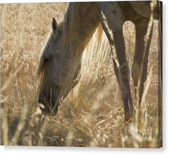 Going Through The Light Canvas Print by Nicole Markmann Nelson