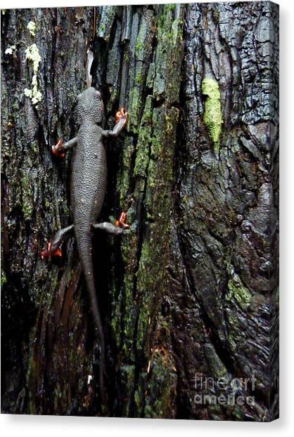 Newts Canvas Print - Going Up by JoAnn SkyWatcher