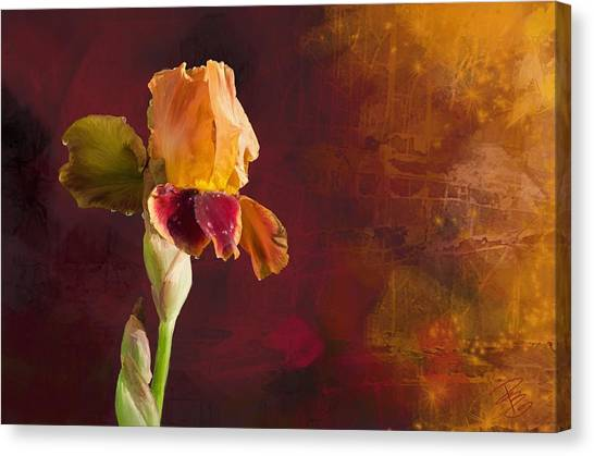 Gold And Red Iris Canvas Print