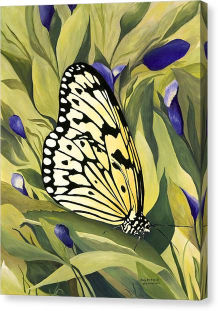 Gold Butterfly In Branson Canvas Print