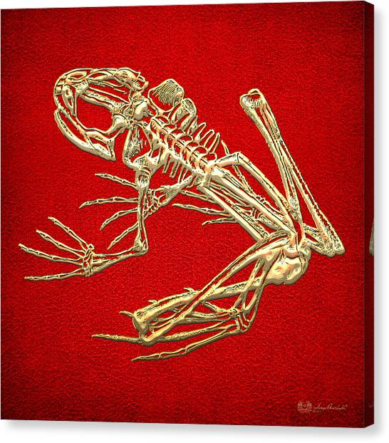 Frogs Canvas Print - Gold Frog Skeleton On Red Leather by Serge Averbukh
