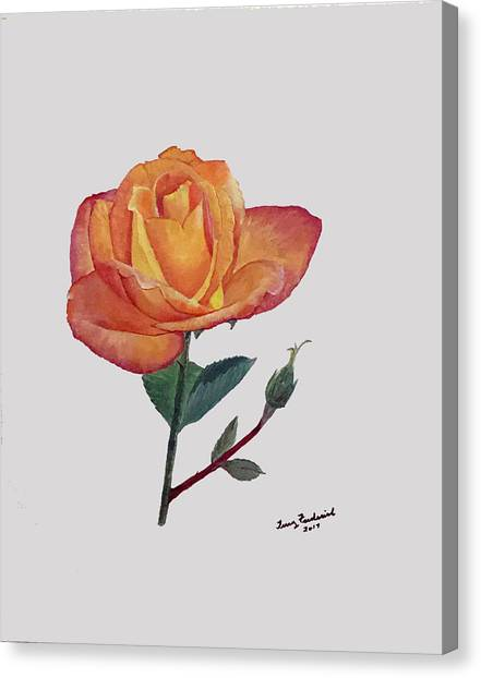 Gold Medal Rose Canvas Print