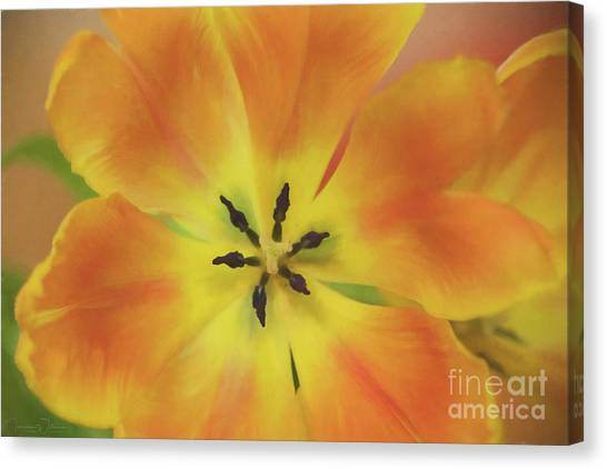 Gold Tulip Explosion Canvas Print