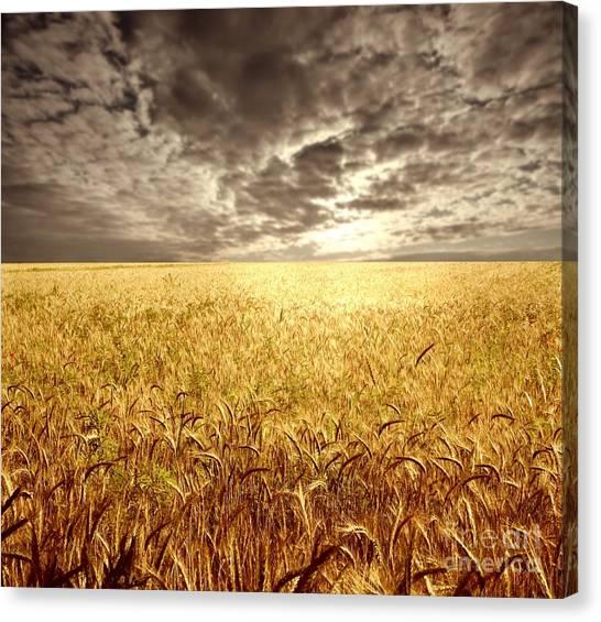 Golden Beautiful Wheat Farm Canvas Print