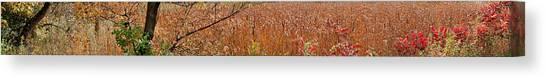 Golden Cattails Canvas Print
