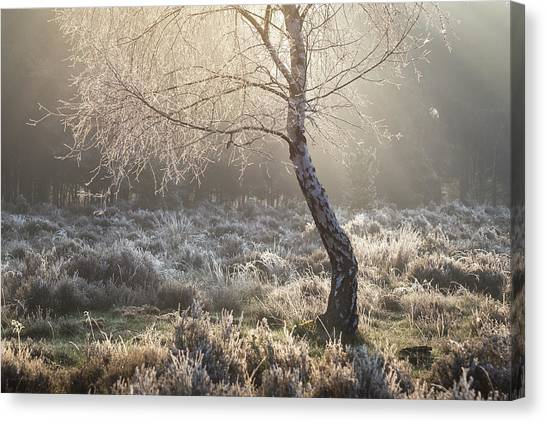 Sherwood Forest Canvas Print - Golden by Chris Dale
