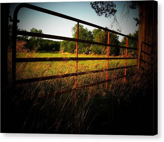 Golden Country Fence Canvas Print