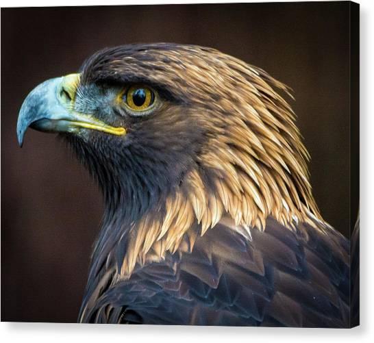 Golden Eagle 2 Canvas Print