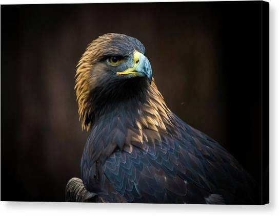 Golden Eagle 3 Canvas Print