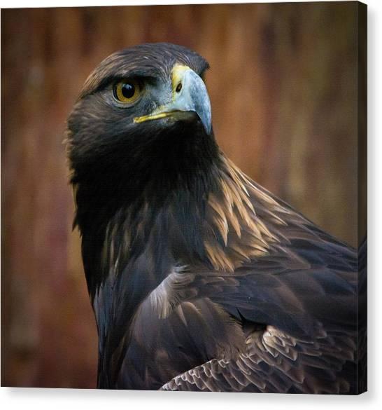 Golden Eagle 4 Canvas Print