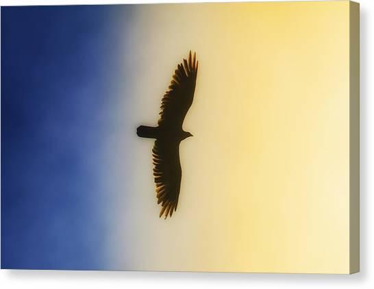Golden Eagle Over Friday Harbor Canvas Print