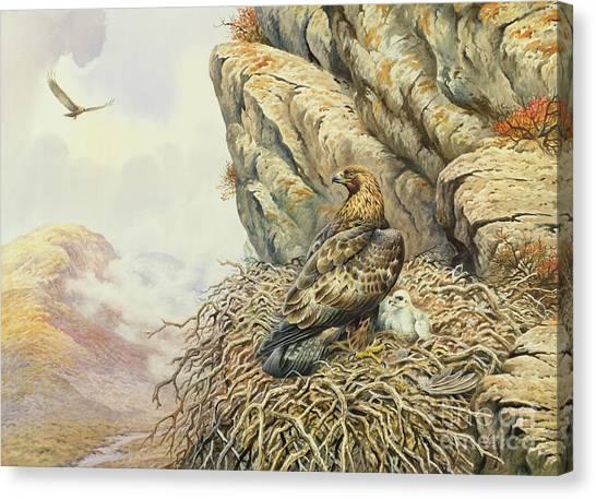 Golden Eagle Canvas Print - Golden Eagles At Eyrie by Carl Donner