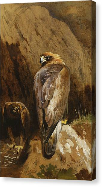 Golden Eagle Canvas Print - Golden Eagles At Their Eyrie by Archibald Thorburn