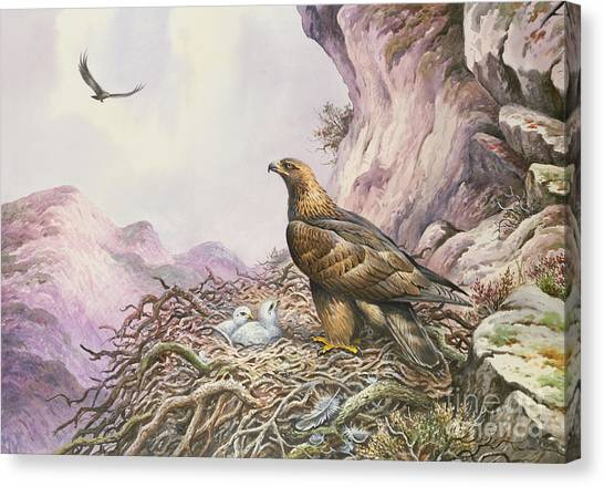 Golden Eagle Canvas Print - Golden Eagles At Their Eyrie by Carl Donner