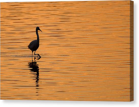 Egrets Canvas Print - Golden Egret by Paul Neville