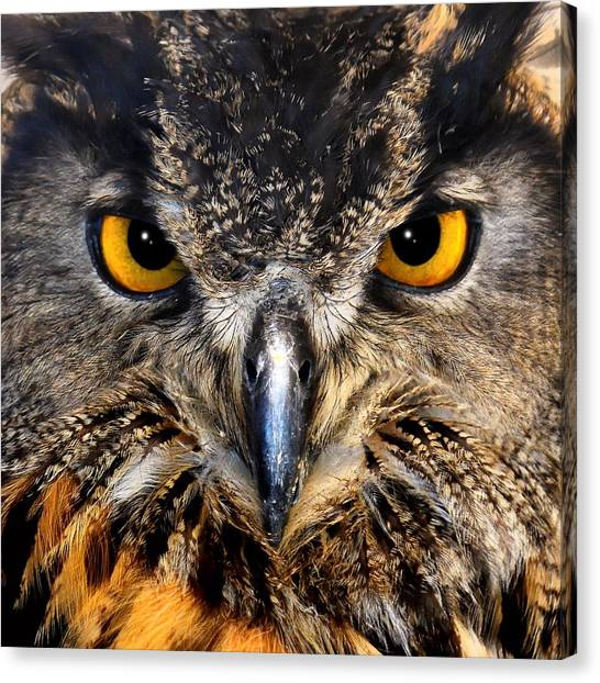 Golden Eyes - Great Horned Owl Canvas Print
