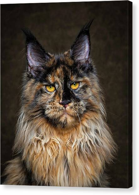Golden Eyes Canvas Print