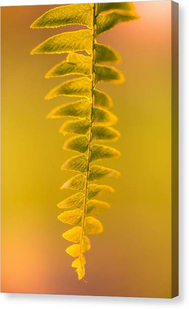 Golden Fern Canvas Print