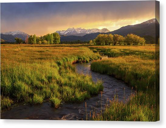 Golden Field In Heber Valley. Canvas Print