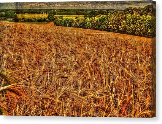 Golden Field In Normandy Canvas Print