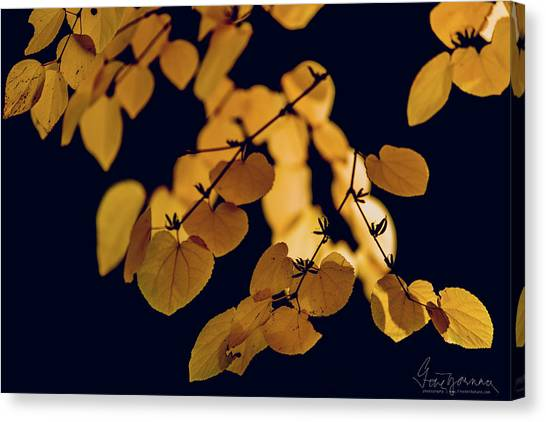 Canvas Print featuring the photograph Golden by Gene Garnace