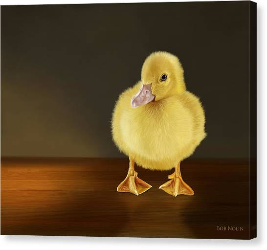 Ducks Canvas Print - Golden Glow by Bob Nolin