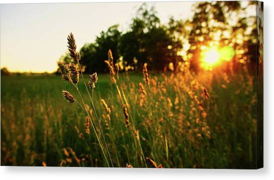Golden Glow Canvas Print