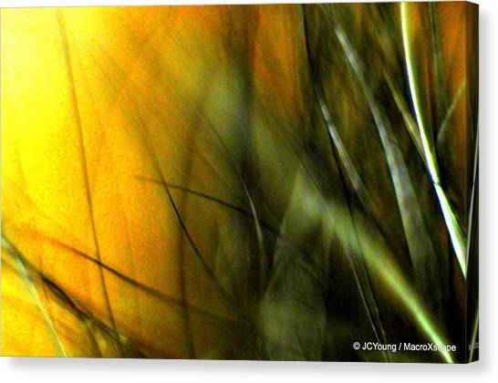 Golden Green Field Canvas Print by JCYoung MacroXscape