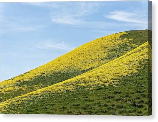 Golden Hills Of California Canvas Print