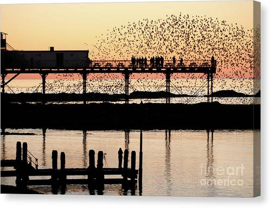 Golden Hour Starlings In Aberystwyth Canvas Print