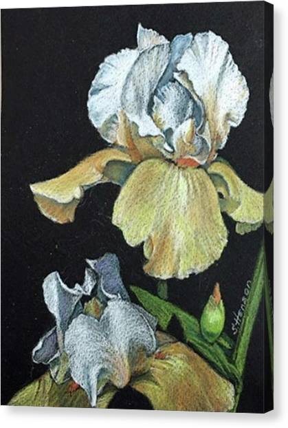 Golden Iris Canvas Print