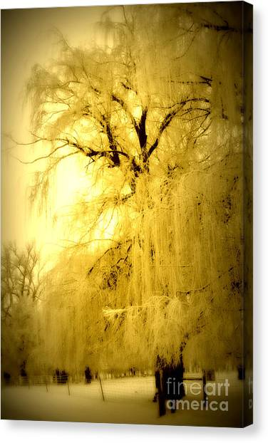 Weeping Willows Canvas Print - Golden by Julie Lueders