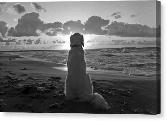 Golden Labrador Watching Sunset Canvas Print