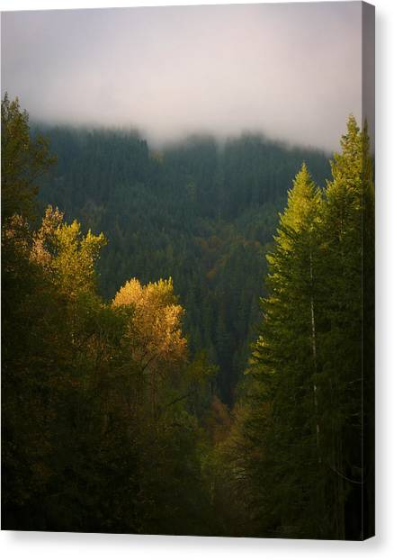 Canvas Print featuring the photograph Golden Light by Priya Ghose
