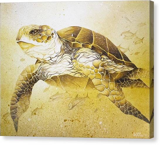 Golden Loggerhead Canvas Print