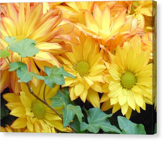 Golden Mums And Ivy Canvas Print