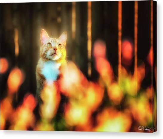 Golden Orange Tabby Canvas Print