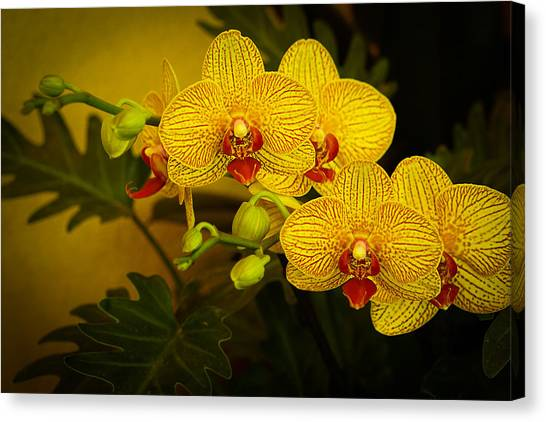 Golden Orchids Canvas Print