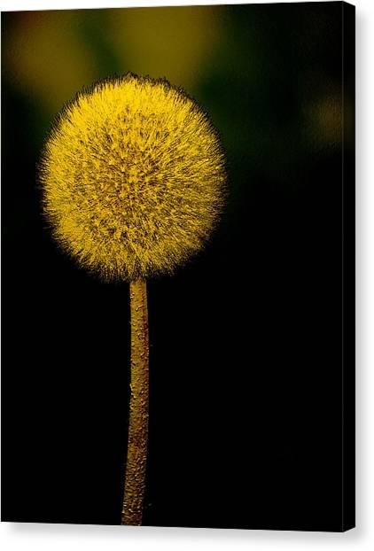 Golden Parachute Canvas Print