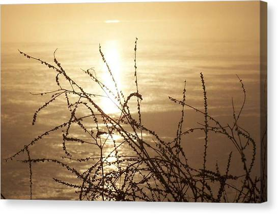 Golden Pond Canvas Print by Laurie Prentice