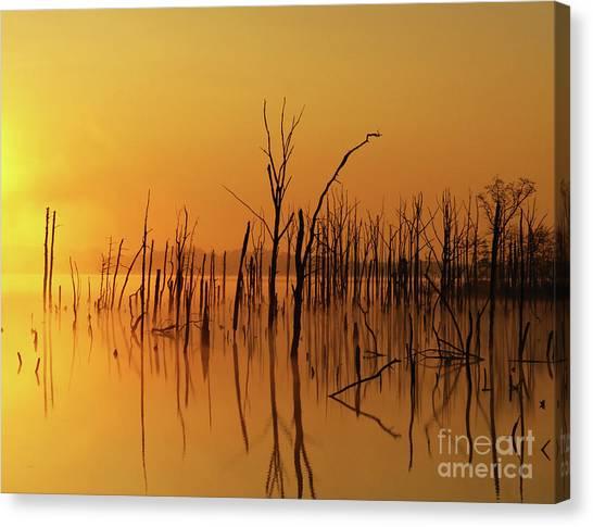 Golden Reflections Canvas Print