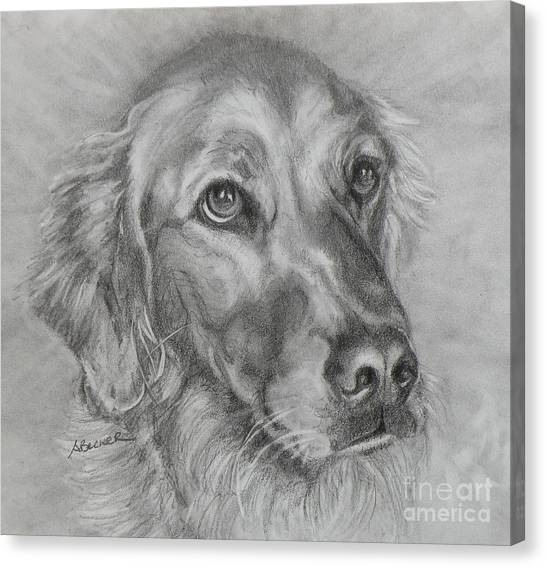 Golden Retriever Drawing Canvas Print