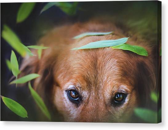 Golden Retrievers Canvas Print - Golden Retriever by Jackie Russo