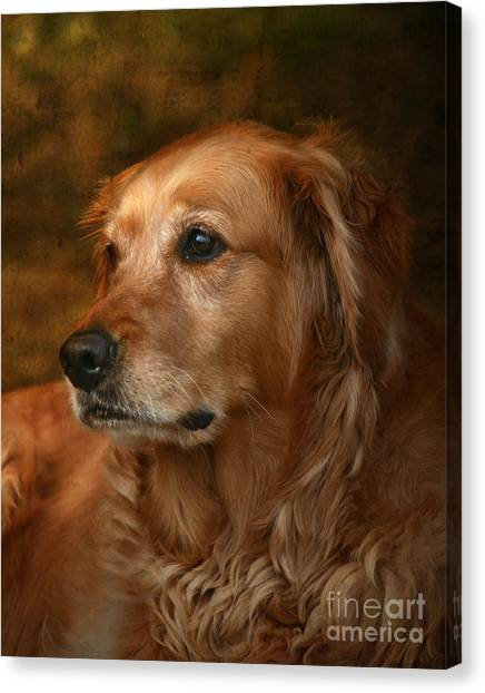 Golden Retriever Canvas Print - Golden Retriever by Jan Piller