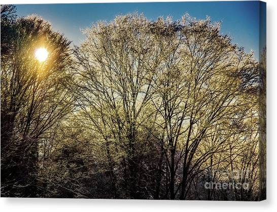 Golden Snow Canvas Print