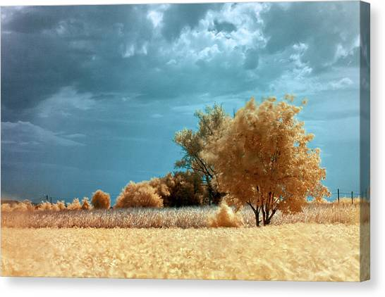 Canvas Print featuring the photograph Golden Summerscape by Helga Novelli