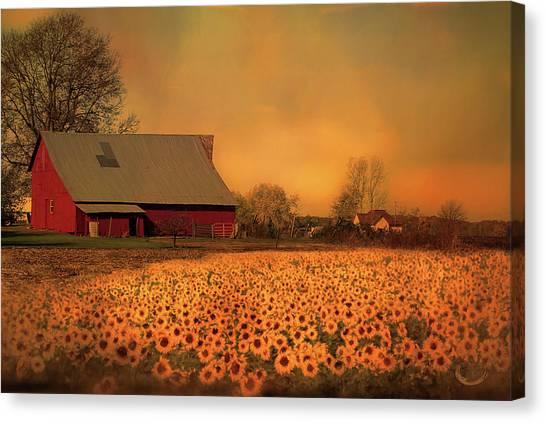 Golden Sunflower Harvest Canvas Print